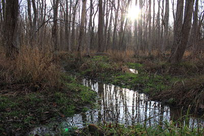 Wetland on Newly Acquired Confluence Property_opt